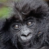 Gorilla & Wildlife Safari