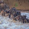 Kenya & Rwanda Safaris
