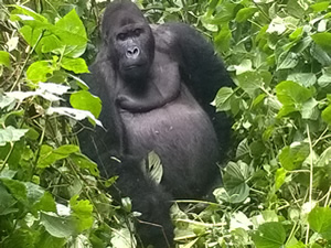 Gorilla Trekking Adventure-1 Day