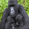 2 Days Uganda Gorilla Safari