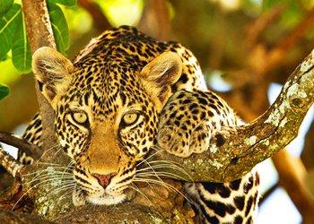 Serengeti Wildlife Safaris