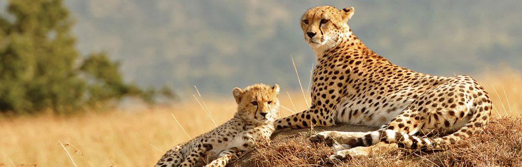 Rwanda Tanzania Safaris