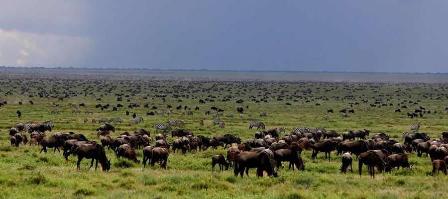Wildlife Tours Tanzania