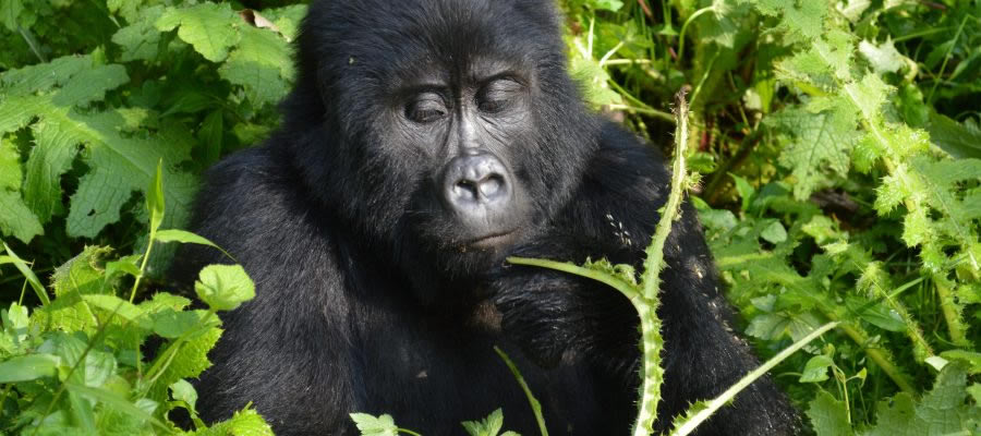 Best Attraction to visit in Virunga National Park