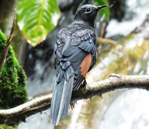 Bird watching in Congo
