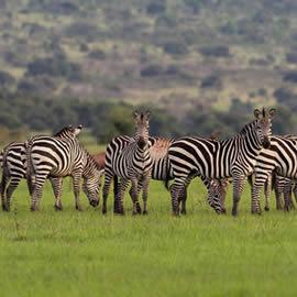 Akagera National Park wanda